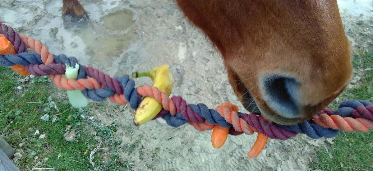 Treat ropes